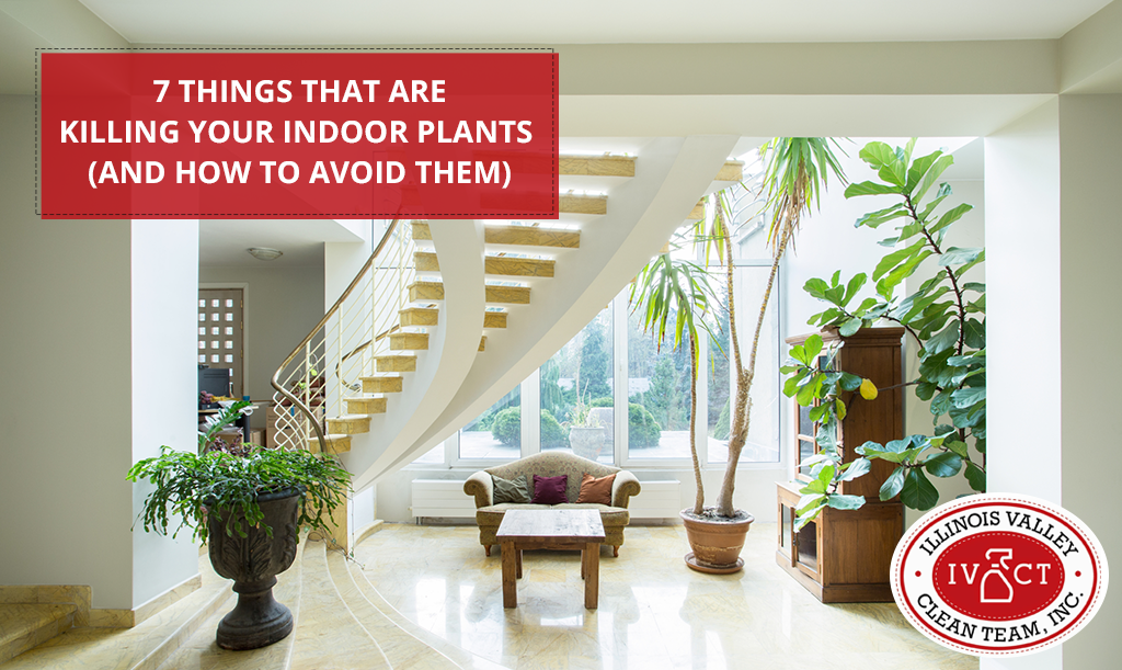 7 Things That Are Killing Your Indoor Plants (And How to ... on dead plant cartoon, dead finger plant, dead angel plant, dead flower, dead gardenia plant, dead office plants, dead orchid plant, dischidia plant, dead horse plant, money tree plant, dead rose plant, dead cannabis plant, dead palm plant, dead fern, dead planet, a dead plant, healthy plant dead plant, dead potted plant, dead plants in pots, dead corpse plant,